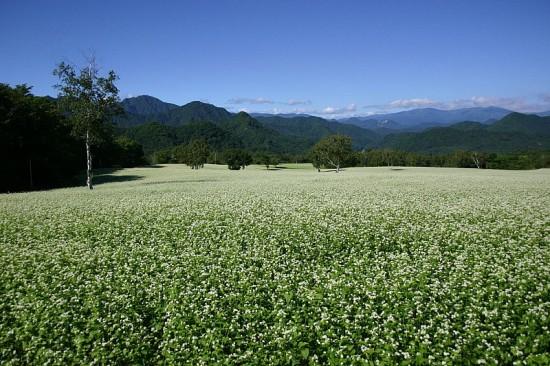■美しい南会津のそば畑 写真:南会津町